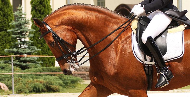 kiropraktor häst västra götaland